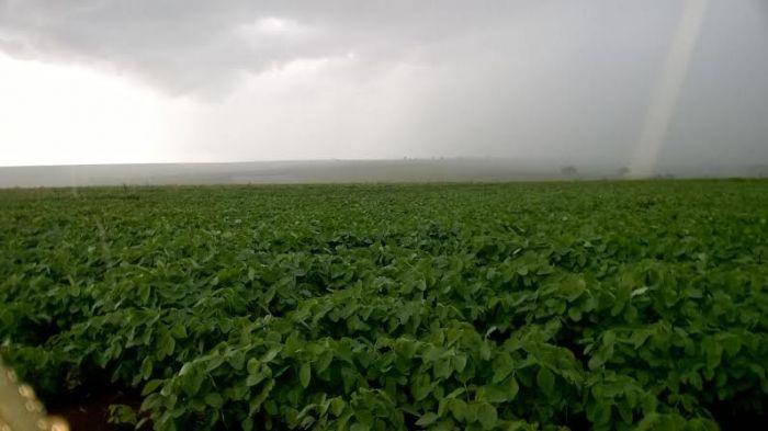 Imagem do dia - Lavoura de soja em Ituiutaba (MG), do produtor e engenheiro agrônomo Luan Hanauer