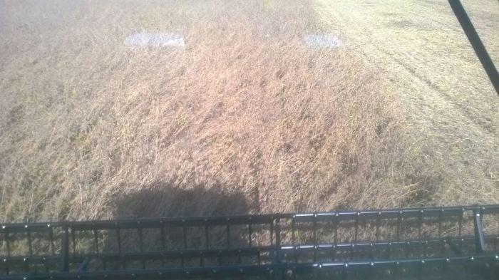 Imagem do Dia - Colheita de soja em Boa Vista do Cadeado (RS), do produtor Diogo Cervi