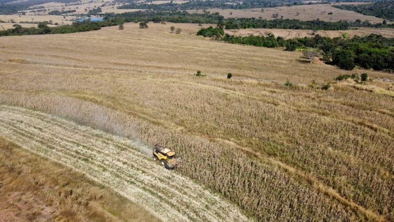 colheita do milho emater goias